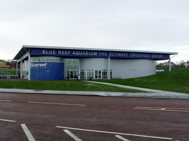 bluereef-akvarium-newcastle