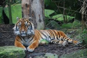 edinburgh-zoo