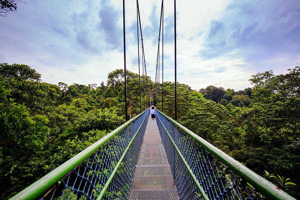 person går over hengebro i Treetop Walk i singapore