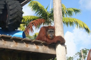 monkey-jungle-miami