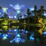 singapore botanisk hage