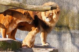 severdigheter københavn zoo