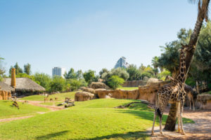 dyrepark i valencia