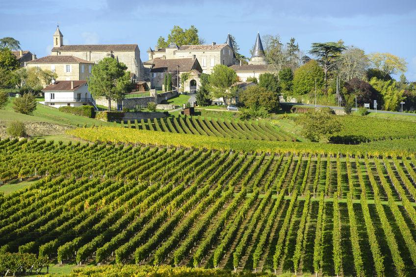 Saint Emilion vingård utenfor bordeaux