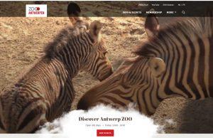 antwerpen zoo - dyrehagen i antwerpen