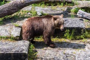 bjørneparken i bern
