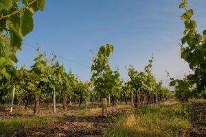 Loire vin