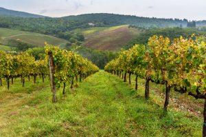 vingårder i toscana